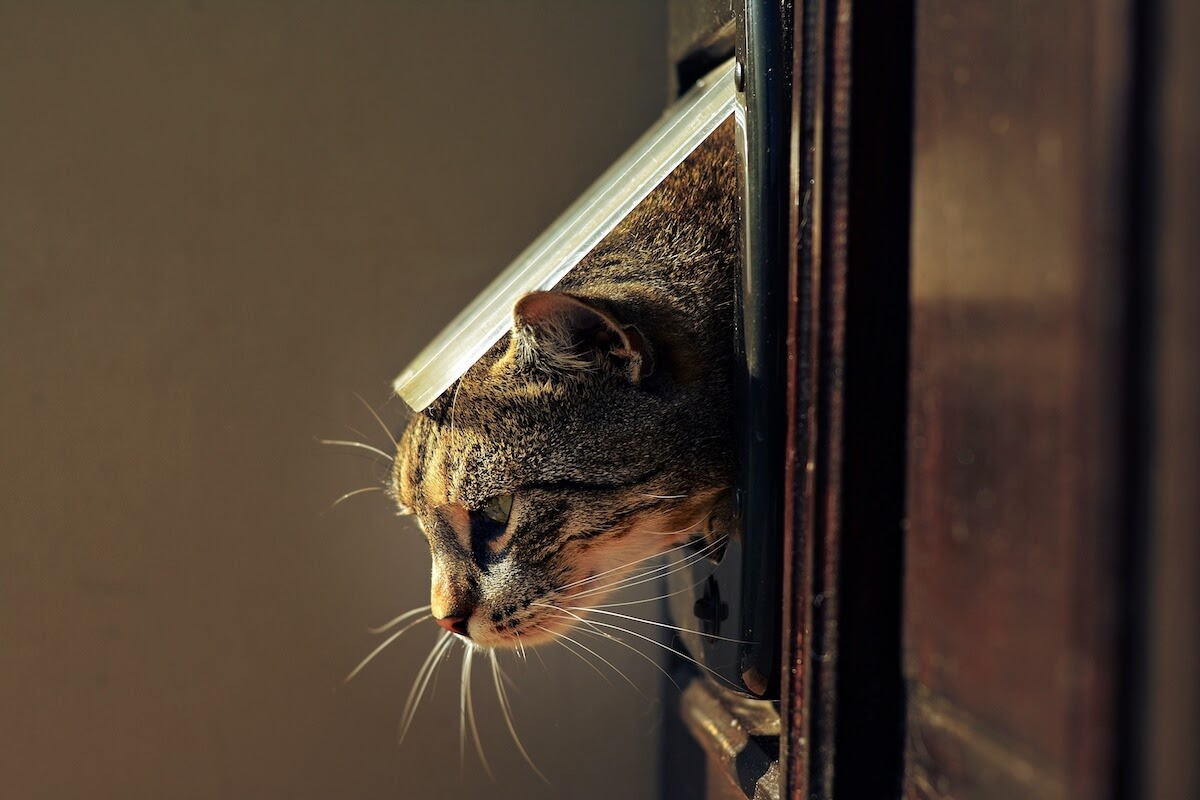 cat going through a cat flap