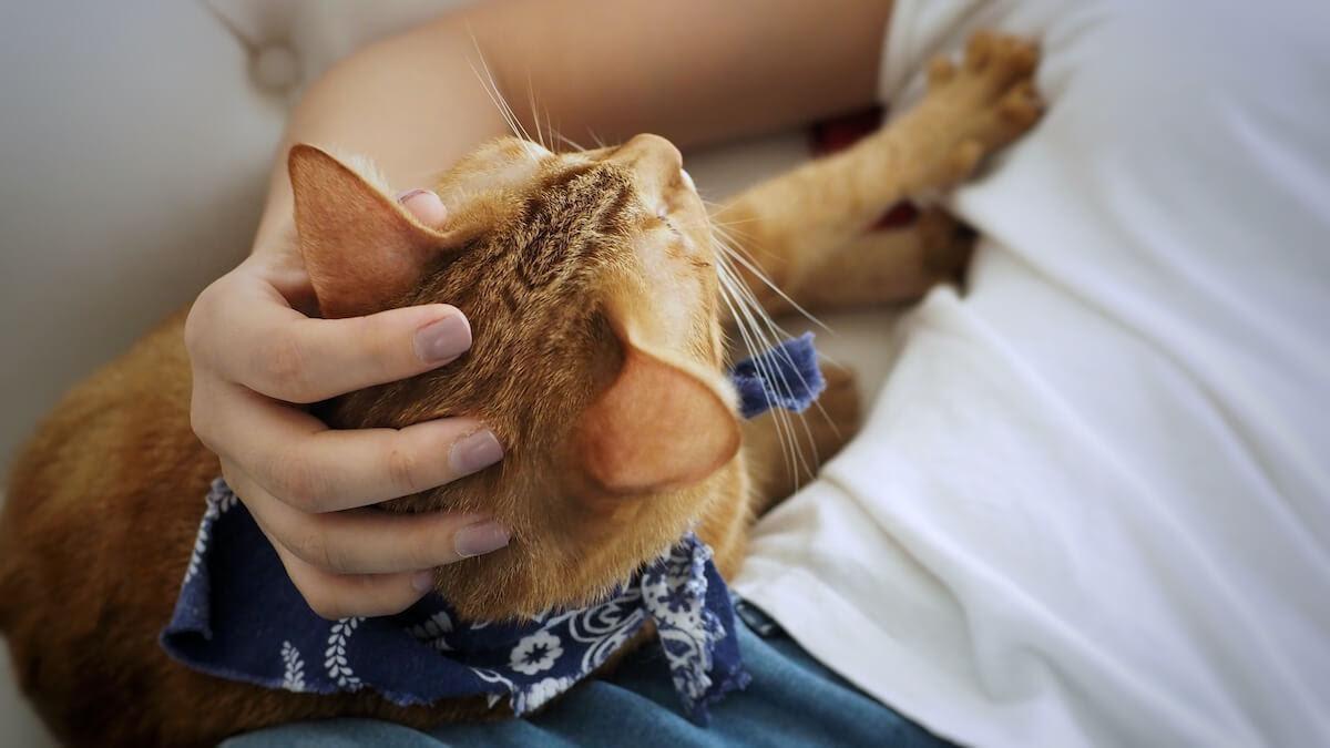 attention aux blessures quand votre chat vous pétrit les jambes !