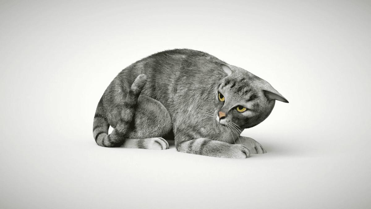 Worry language of cat