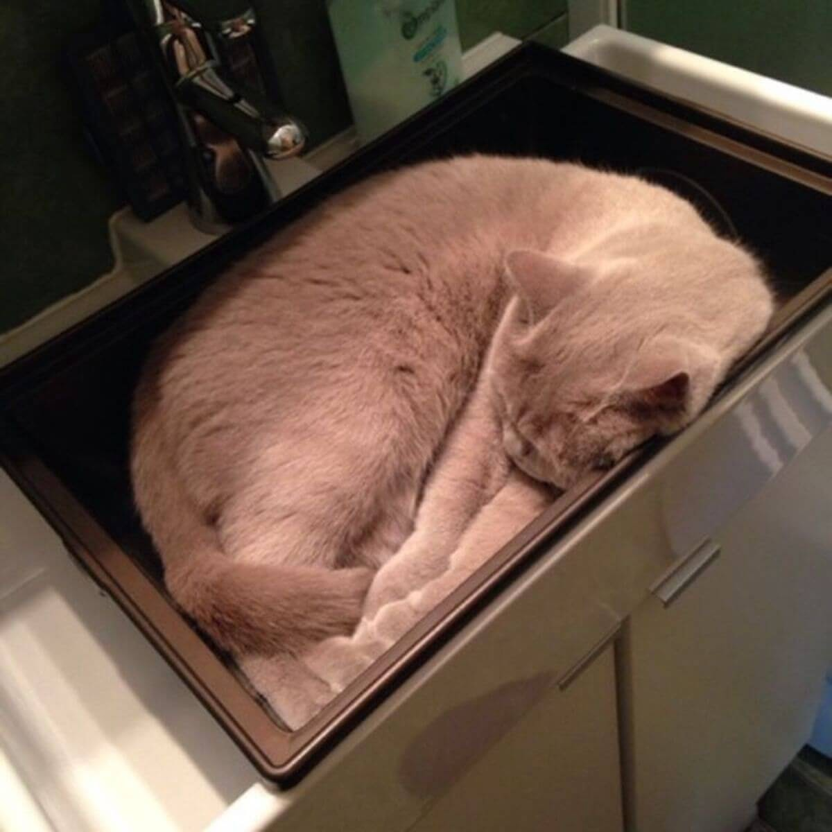 How long does a cat usually sleep for ?