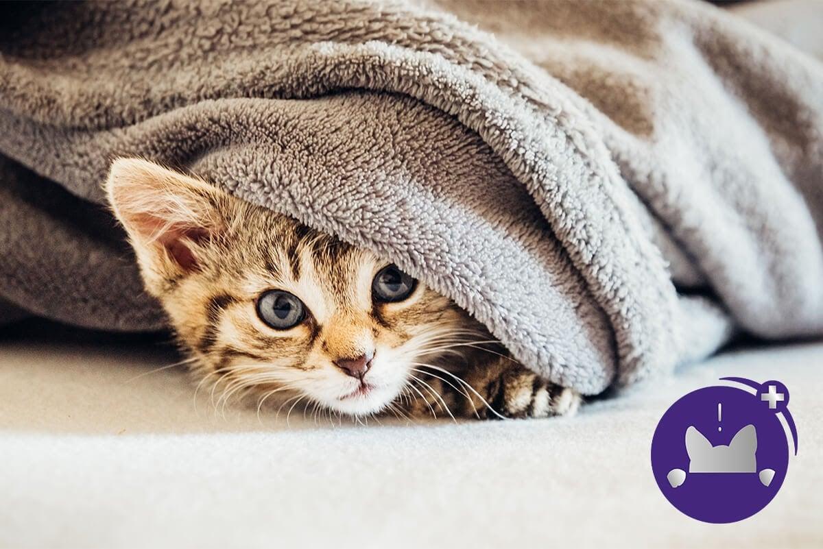 Cat Hiding FELIWAY Optimum