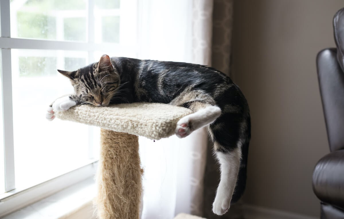 cat sleeping on scratching post