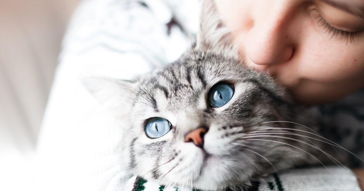 How Feliway Optimum can help cats