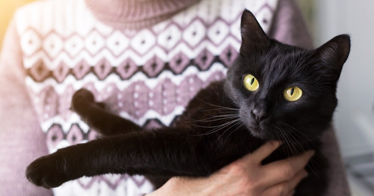 cat breeds and personalities