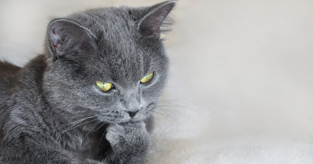 understanding cat stress