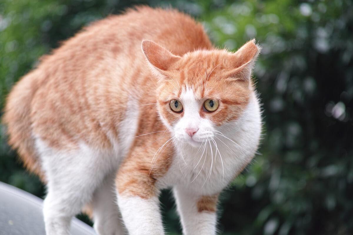 Principali sintomi di stress nel gatto