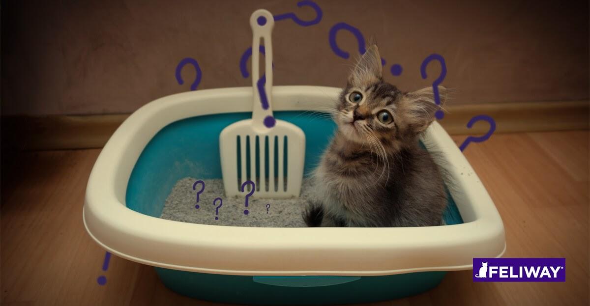 litter training a kitten?