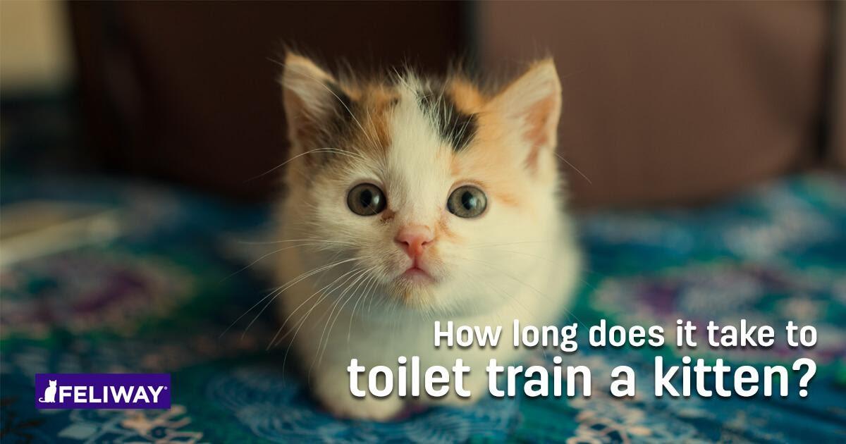 How Long Does It Take to Litter Train a Kitten?
