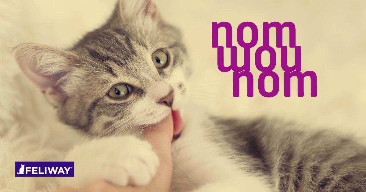 kitty biting a finger