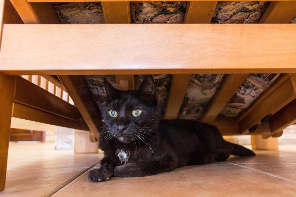 Gato preto se escondendo