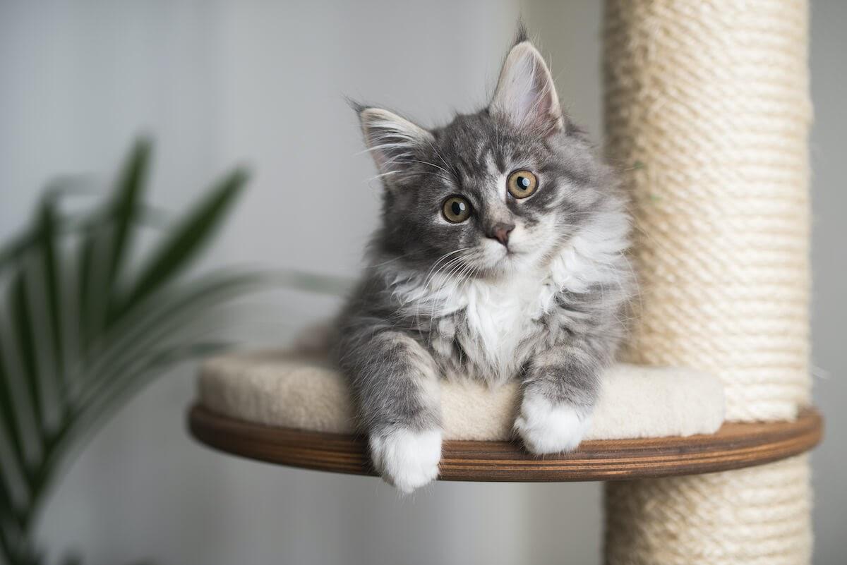 les chats se placent en hauteur pour se sentir en contrôle