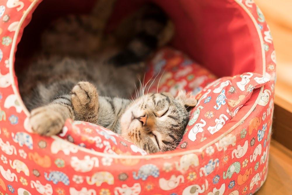 Katt som ligger och sover i ett kryp-in