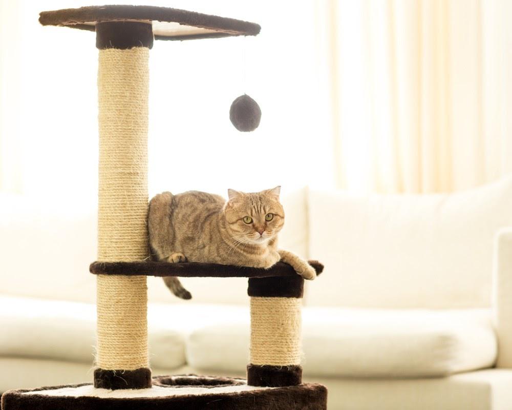 Katt på sin klösträd