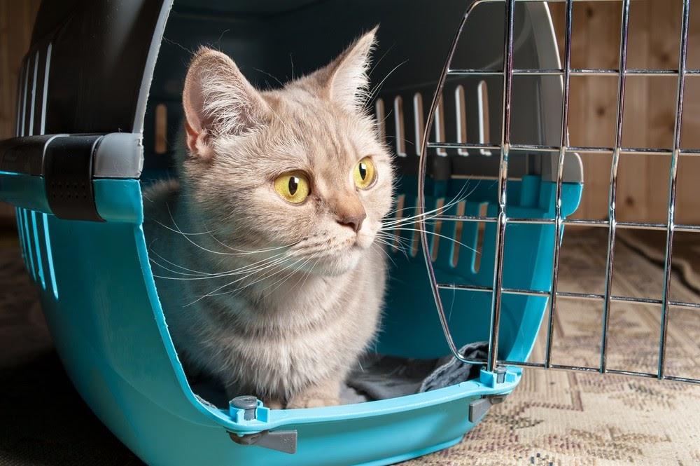 Katt i sin transportbur