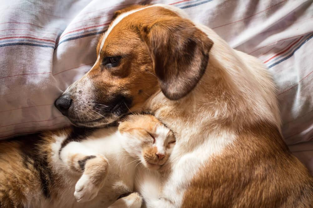 cute cat sleeps with a dog