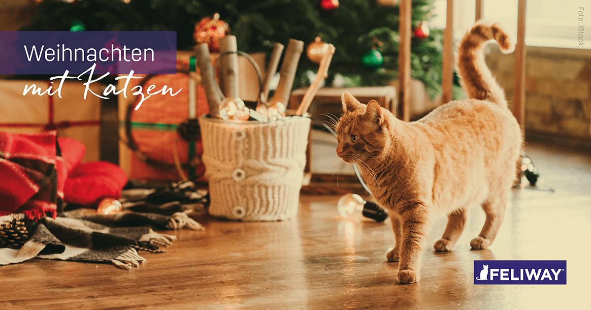 Tipps für ein sicheres und entspanntes Weihnachten mit Katzen