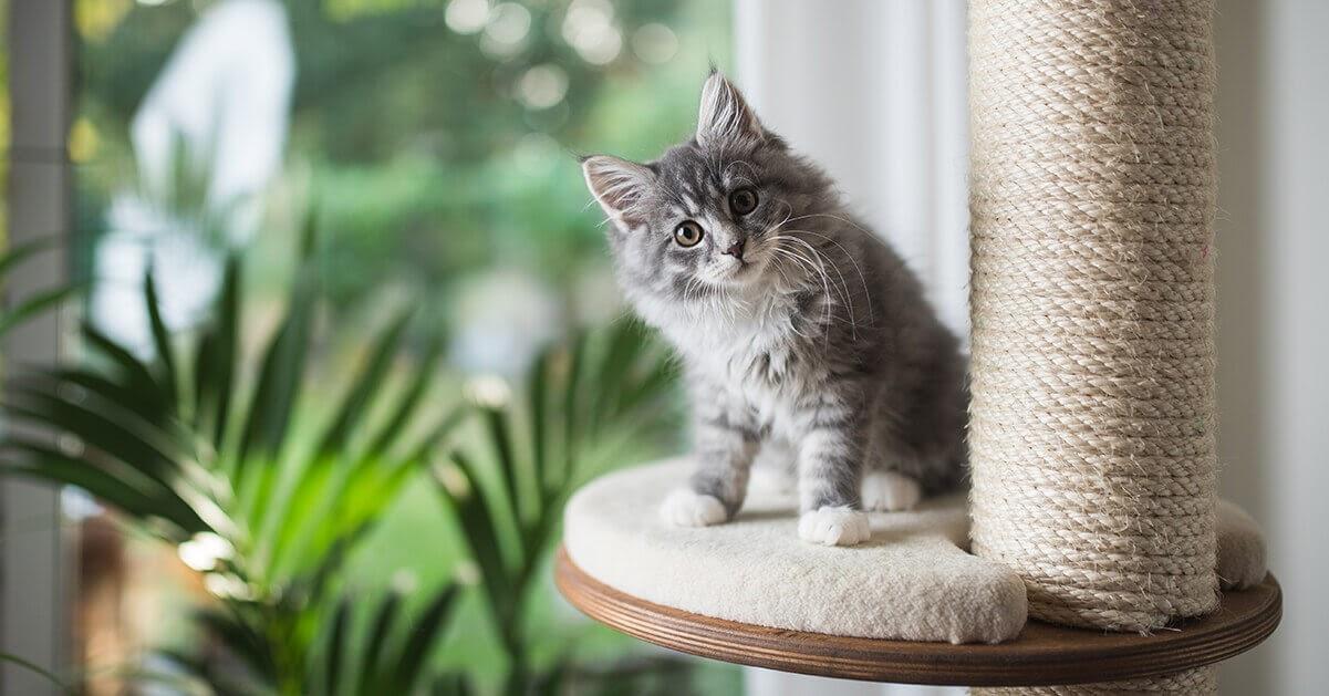 4 tips om je nieuwe kitten gerust te stellen