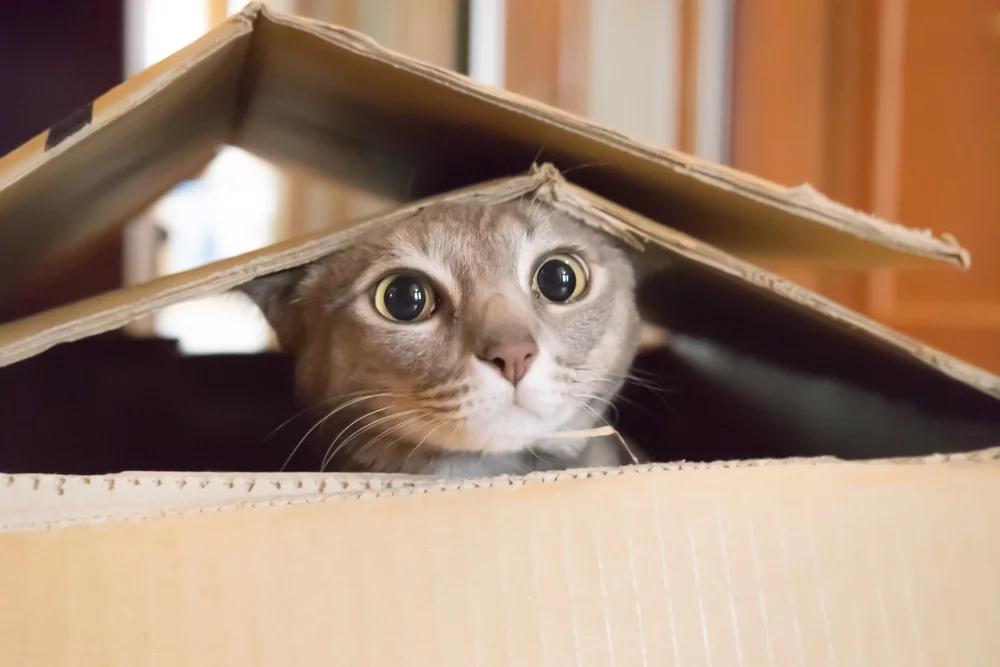 Warum hat meine Katze an Silvester Angst?