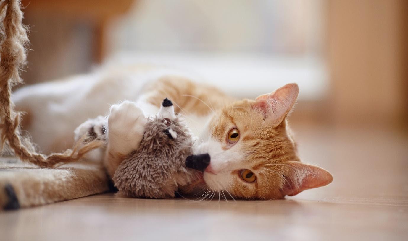Coronavirus: entspannte Katzen in der Quarantäne mit FELIWAY