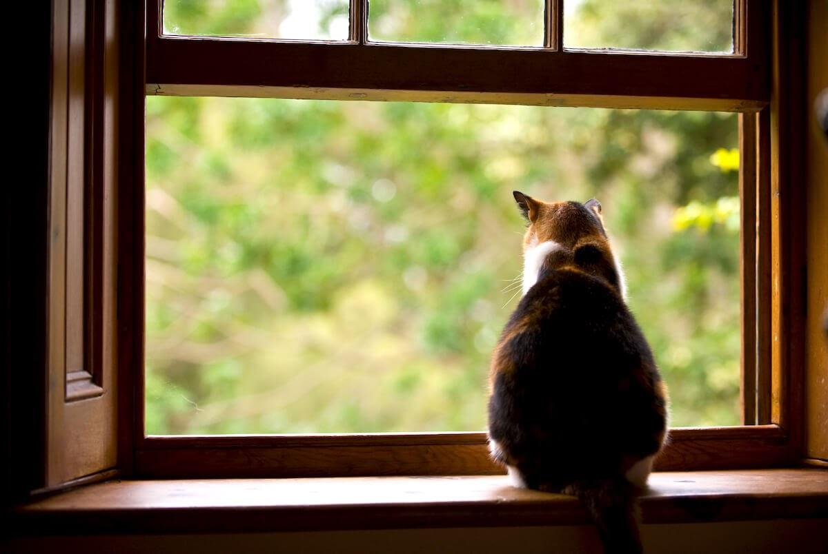 Gato observador