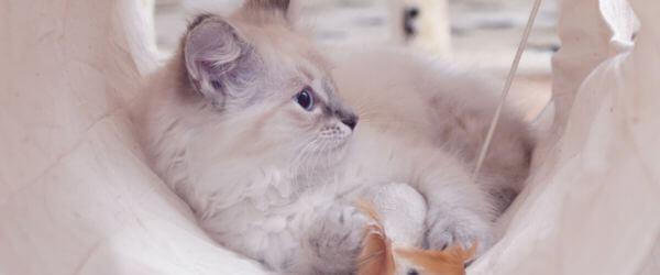 Η παραμονή στο εκτροφή μπορεί να προκαλεί άγχος στις γάτες