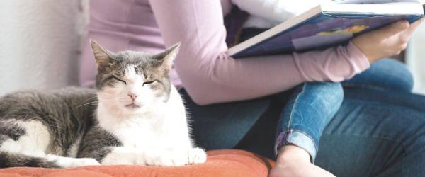 Επισκέπτες, μπορούν να προκαλούν άγχος στις γάτες