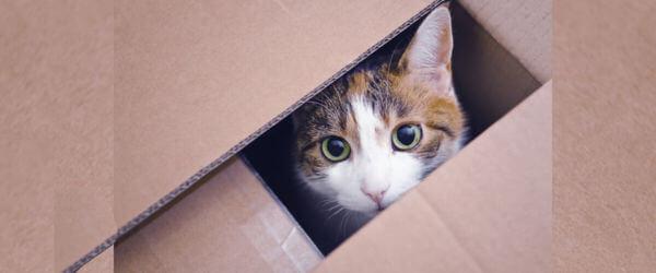 Μια μετακόμιση μπορεί να προκαλεί άγχος στις γάτες