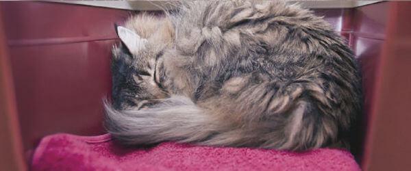 Τα ταξίδια μπορούν να προκαλούν άγχος στις γάτες