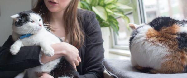 Η γάτα σας τσακώνεται με τις άλλες γάτες;