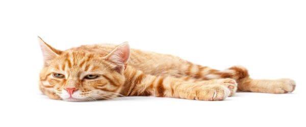 Η γάτα σας έχει μειωμένη δραστηριότητα;