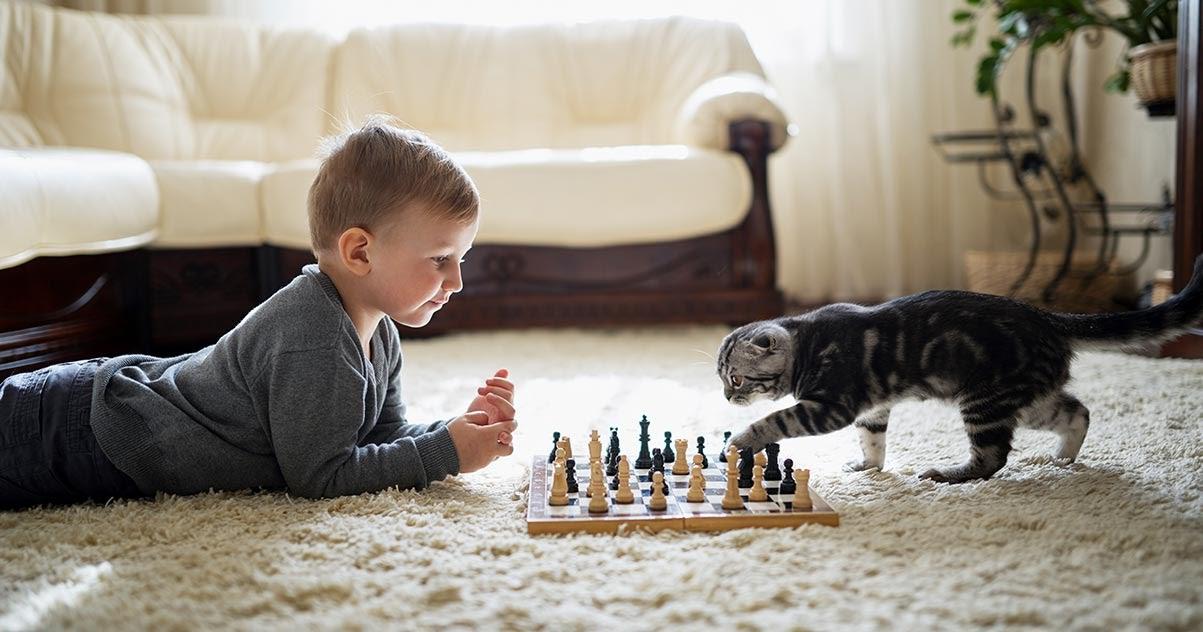 Mit Katzen spielen macht Spaß