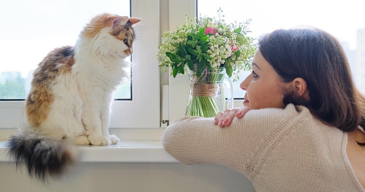 Katzen sind gute Zuhörer