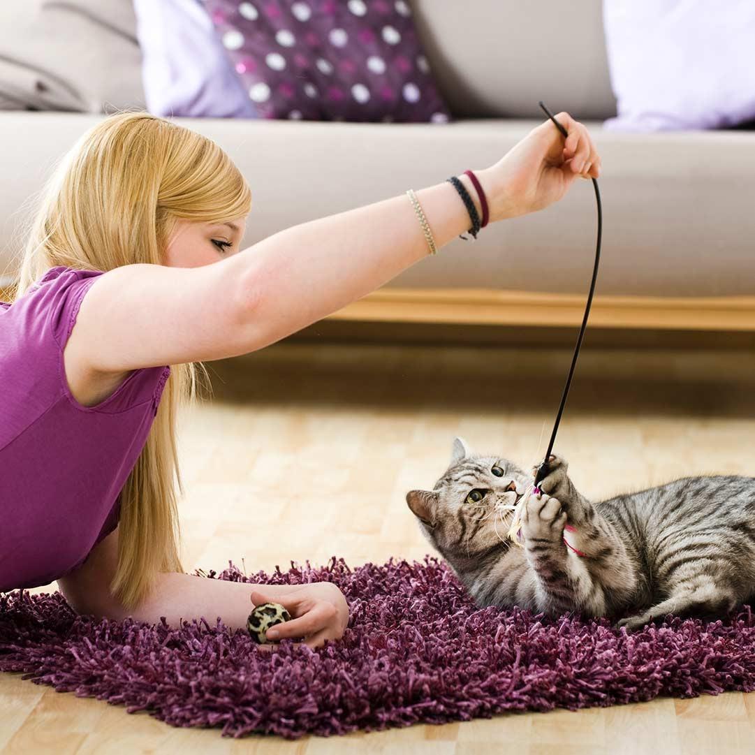 Occupez votre chat avant de commencer à travailler
