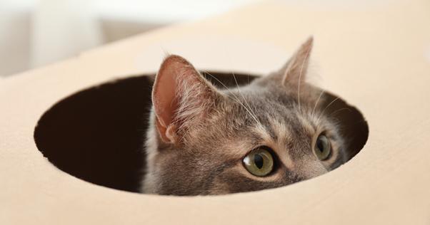 Gato se escondendo