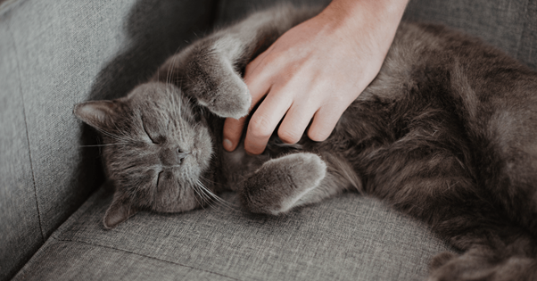 Gato no sofá