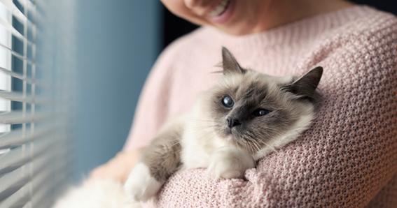 Bem estar e conforto para o gato