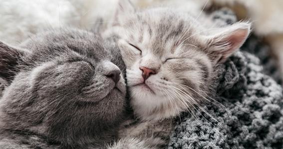 Gatos convivendo em harmonia