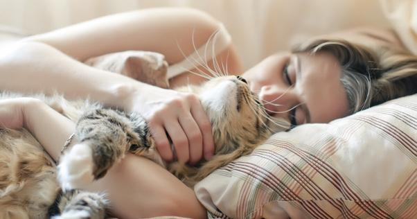 gato na cama com o dono