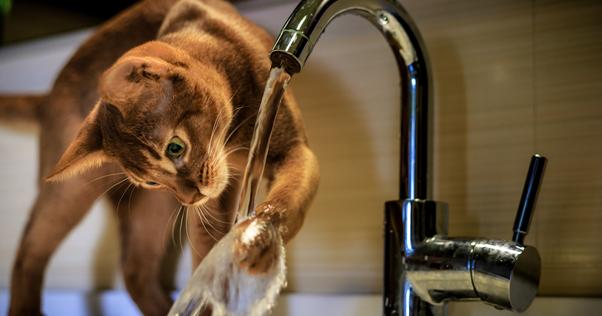 Gatos bebendo água da torneira