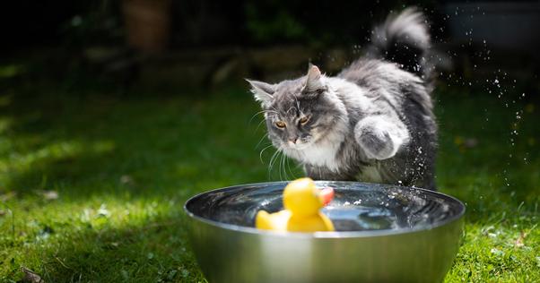 Gatos tomando banho