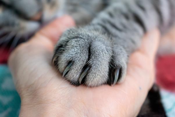 Garras de Gatos