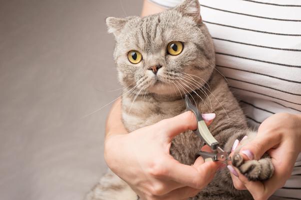 Cortando as unhas do Gato
