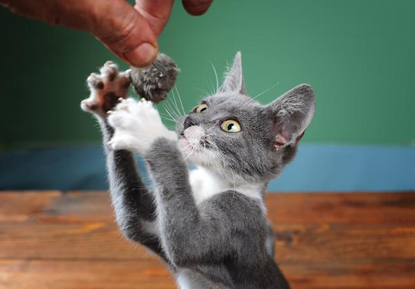 Brincando com o gato