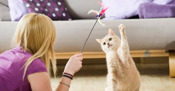 Gatos e brincadeiras
