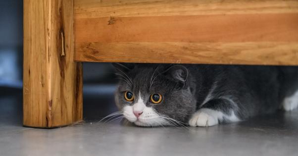 gato no esconderijo