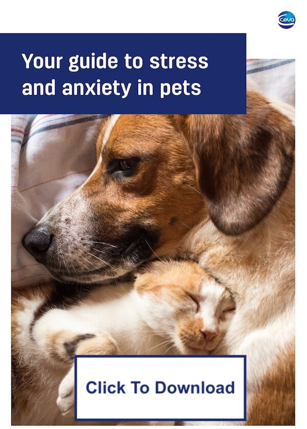 pet-anxiety-book