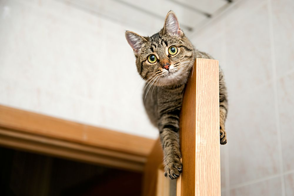 high up kitty