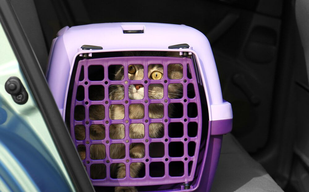 travel Carrier box with cat in car