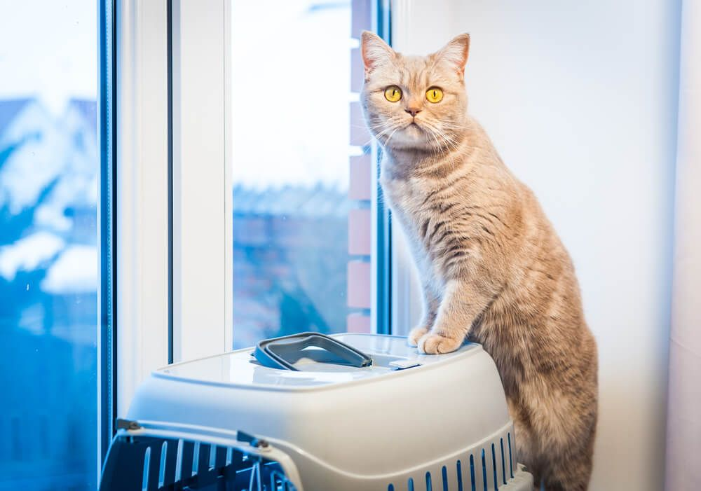 travel Cat sits on a pet carrier near window